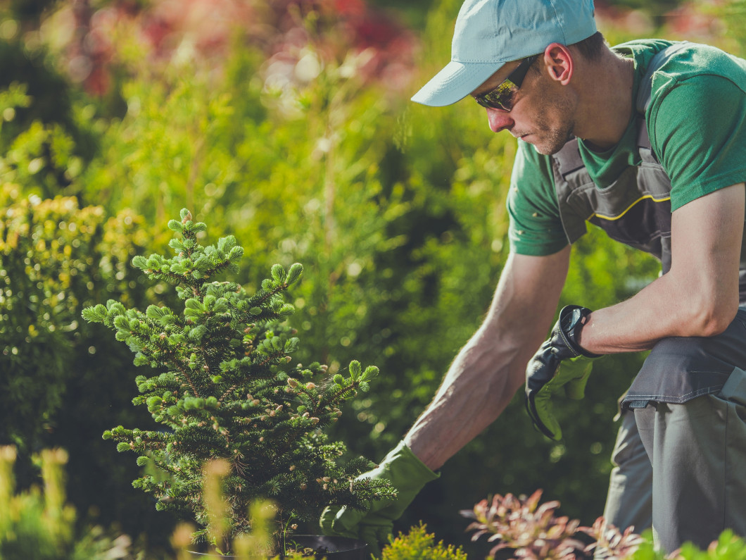 Planting, emergency tree service