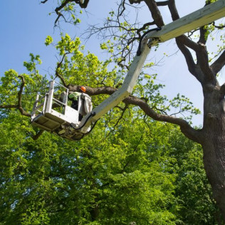 Tree Trimming in Houston tx, emergency tree service