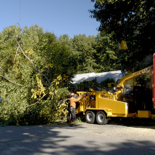 Tree Removal in Houston tx,. tree services